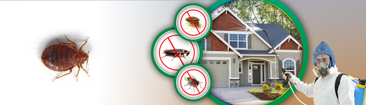 Bed Bug Pest Control Dubai