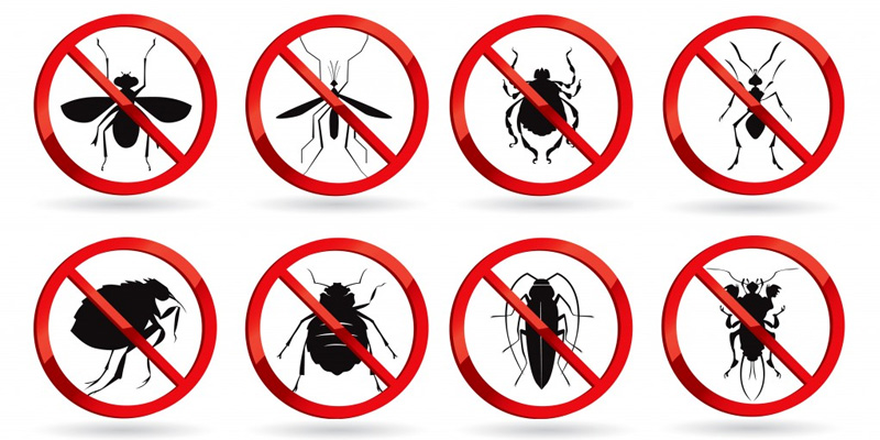 More About pest control in Dubai