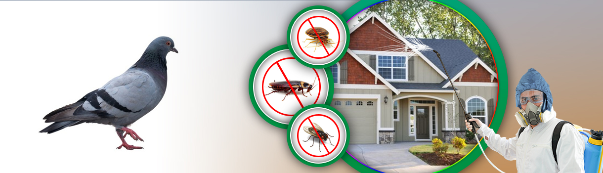 Bird pest Control Dubai UAE